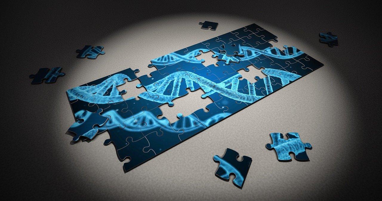 Szívbetegségek és génhibák összefüggései