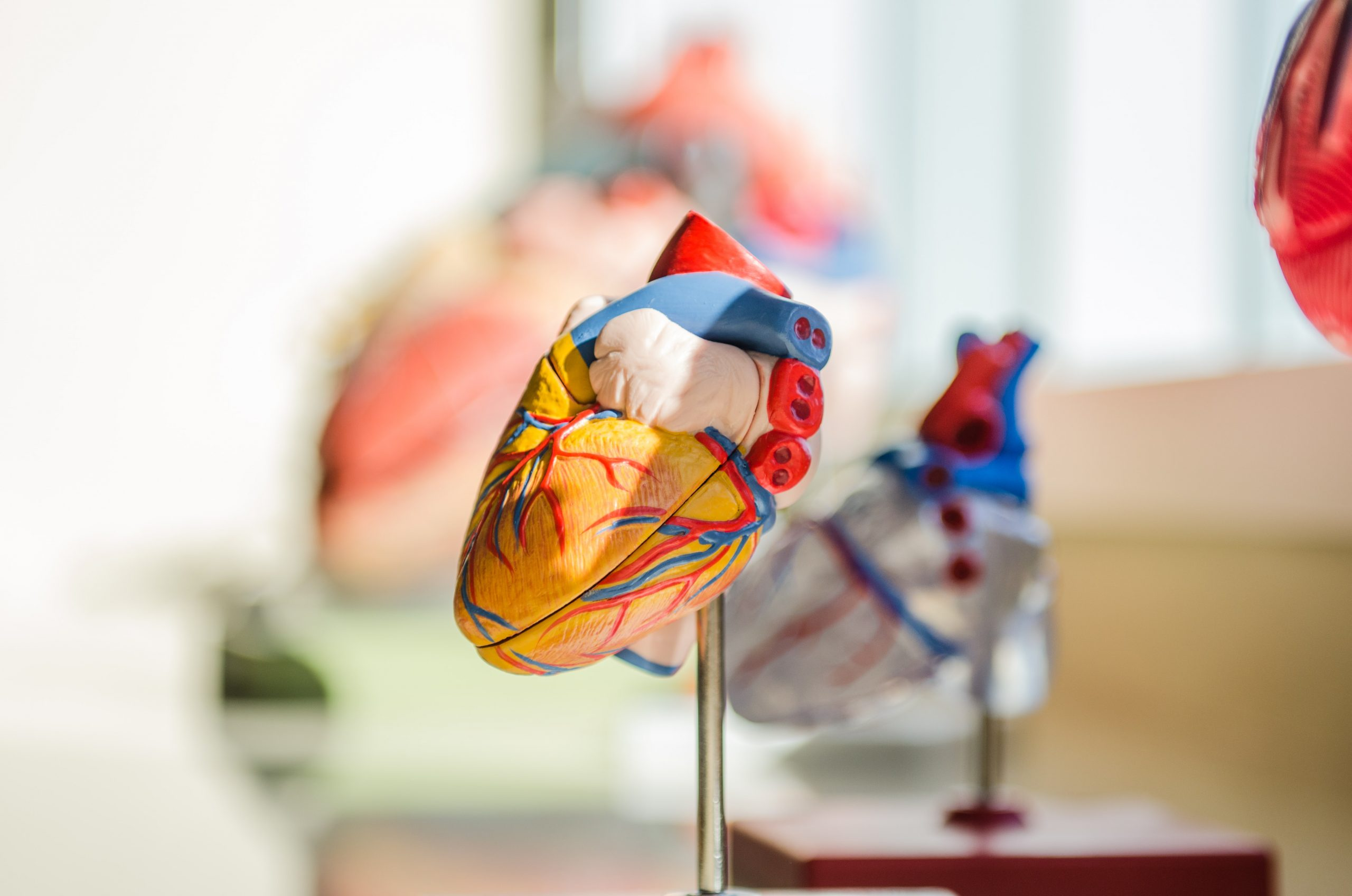 Szívbillentyű- és szívbelhártya-gyulladás